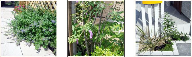 夏のおすすめ植栽